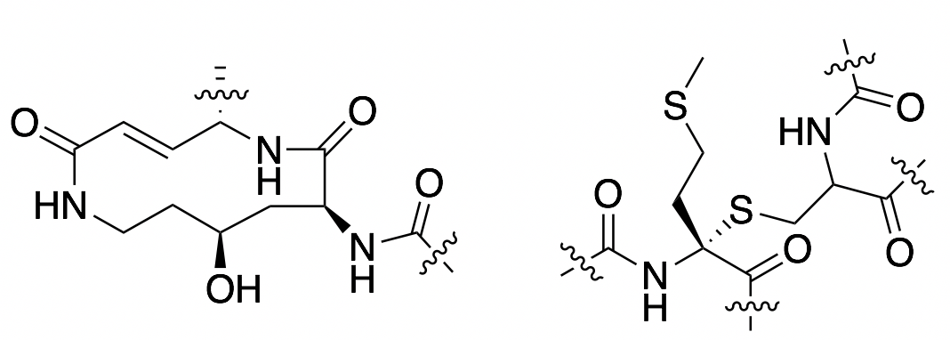 ChemDraw structure of interesting structures in antimicrobial peptides